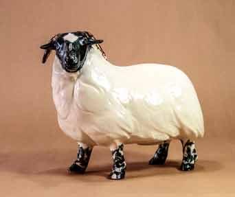 Sharp Scottish black faced ewe